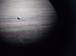 First night Grizzly through spotting scope